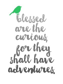 Educational Travel - Blessed are the curious, for they shall have adventures.